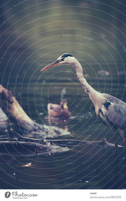 Herr Strese auf Jagd Natur Wasser Landschaft Tier Umwelt natürlich See Vogel wild Wildtier warten Feder Flügel fantastisch beobachten Neugier