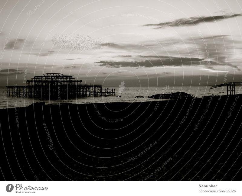 Old Pier II Brighton verfallen unbeständig Meer Anlegestelle Vogelschwarm Vergangenheit Rest Pause Erneuerung Synthese Einsamkeit Wellen Verfall anzünden dunkel