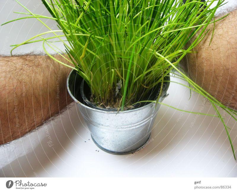 chun - Frühling grün Schnittlauch Pflanze Gesundheit Ekel photocase Beine Haare & Frisuren Haut