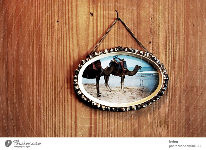 Die guten Jahre der Anderen 100 Ferien & Urlaub & Reisen Strand Sand einfach Reisefotografie Bilderrahmen Holzwand Kamel Dromedar Urlaubsfoto Holzvertäfelung