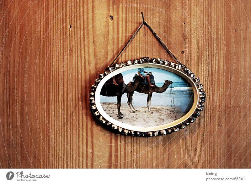 Die guten Jahre der Anderen 100 Ferien & Urlaub & Reisen Strand Sand einfach Reisefotografie Bilderrahmen Holzwand Kamel Dromedar Urlaubsfoto Holzvertäfelung Bild-im-Bild Vor hellem Hintergrund