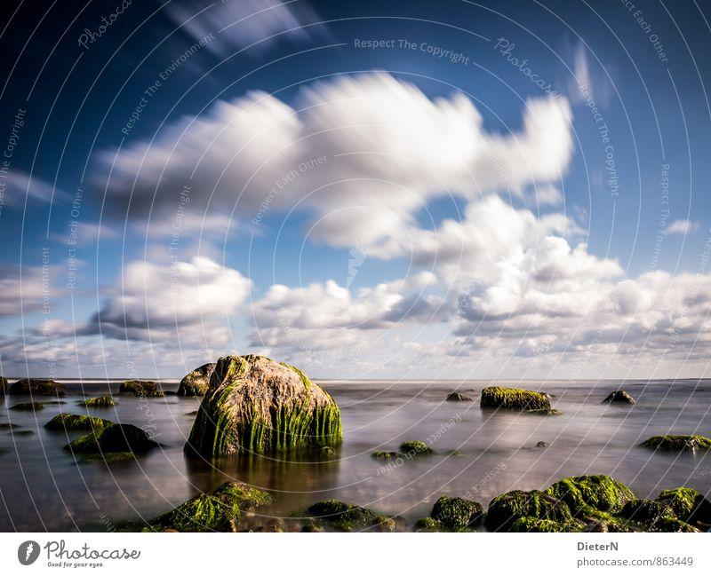 Bewachsen Umwelt Natur Landschaft Luft Wasser Himmel Wolken Sommer Wetter Schönes Wetter Wind Küste Strand Ostsee blau grün schwarz weiß Stein Algen