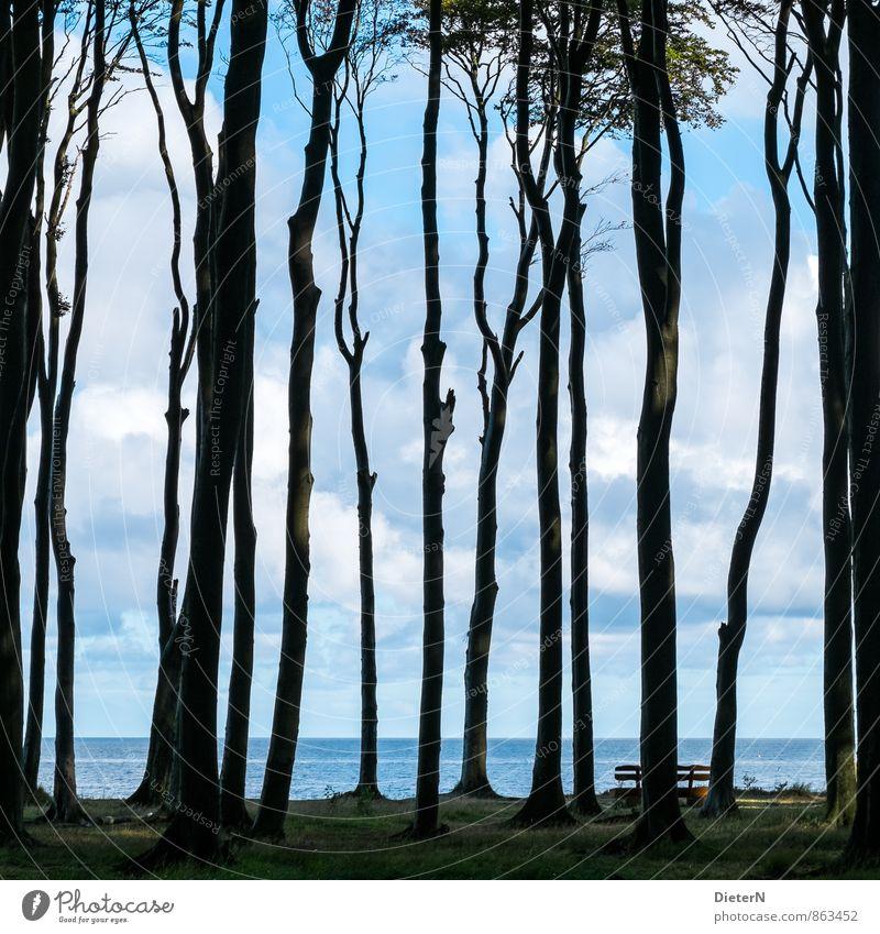 Durchblick Himmel blau weiß Wasser Baum Landschaft Wolken schwarz Wald Umwelt Gras Küste Horizont Ostsee Mecklenburg-Vorpommern Gespensterwald