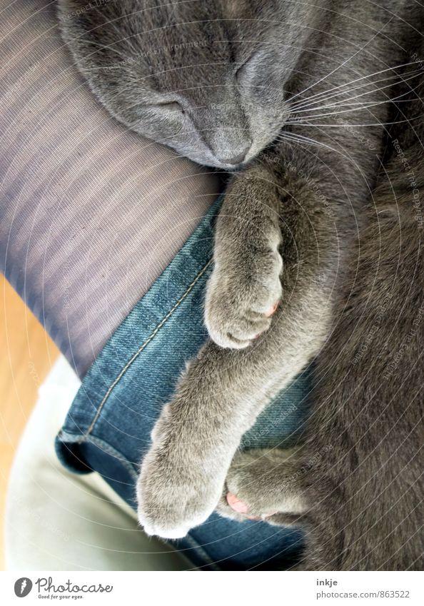 wohlfühlen Frau Erwachsene 1 Mensch Haustier Katze Tiergesicht Erholung genießen liegen schlafen Zusammensein kuschlig Gefühle Stimmung Zufriedenheit Vertrauen