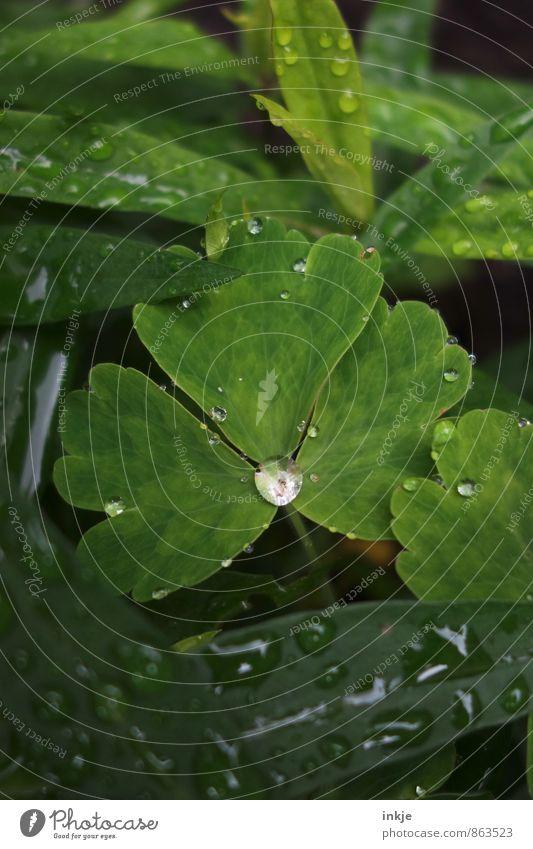 kost.bar | Regenwasser Umwelt Natur Pflanze Wassertropfen Sommer Klima Wetter Blatt Garten Park frisch klein nah nass natürlich rund saftig grün weiß sattgrün