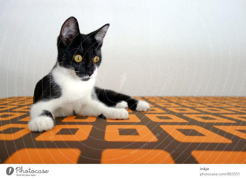 psychedelic cat aka pixie Haustier Katze Katzenbaby 1 Tier Tierjunges Muster beobachten entdecken liegen Blick klein lustig Neugier niedlich retro orange