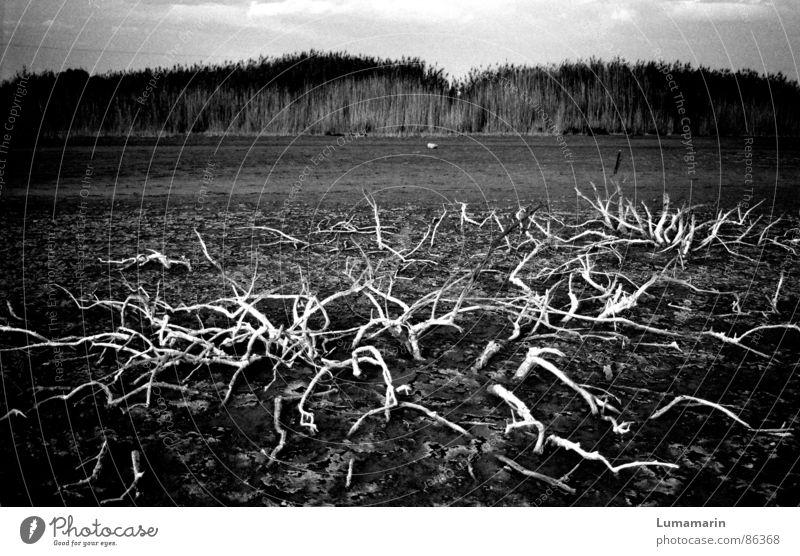 come up and go down Pflanze Tod Traurigkeit gehen Erde Trauer Wachstum Sträucher Boden Bodenbelag Ast Vergänglichkeit verloren kommen Trennung Dürre
