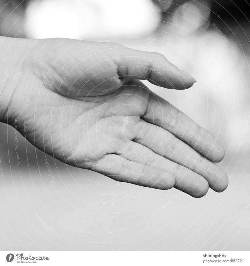 handshake feminin Frau Erwachsene Hand Finger 30-45 Jahre Erfolg grau schwarz weiß Willensstärke Mut Tatkraft Akzeptanz Vertrauen Sicherheit Einigkeit