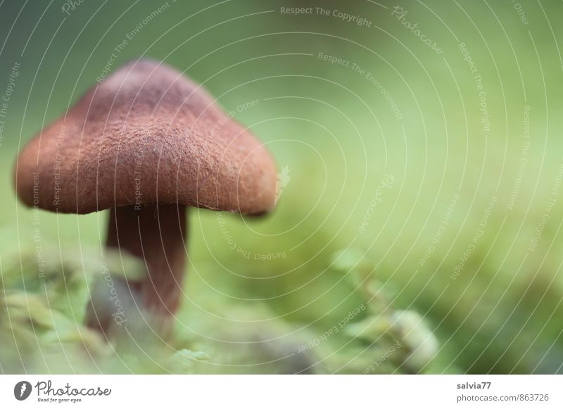 Brownie Natur Pflanze grün Einsamkeit ruhig Wald Umwelt Herbst Tod natürlich klein braun Wachstum Erde authentisch stehen