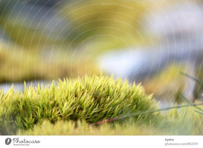 Feuchtgebiet Erholung Ferien & Urlaub & Reisen Ausflug Sommer Natur Pflanze Erde Schönes Wetter Moos Unkraut Wiese Wald Feuchtgebiete Feuchtwiese Wachstum