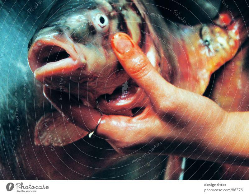 Was willst du? Hand Großmaul Blick Ernährung Fisch Tod Maul Karpfen Fischkopf Fischmaul Fischauge Totes Tier Frauenhand festhalten haltend