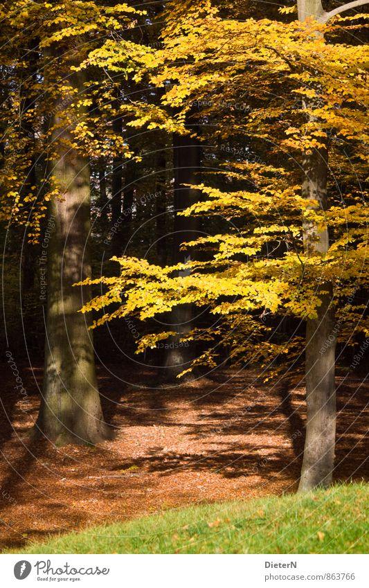 Herbst Natur Pflanze grün Baum Blatt schwarz Wald gelb Gras braun Park gold Mecklenburg-Vorpommern welk Indian Summer