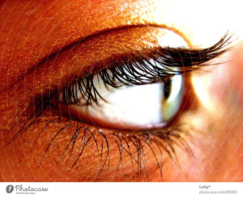 golden eye blau Auge nah tief Wimpern Regenbogenhaut