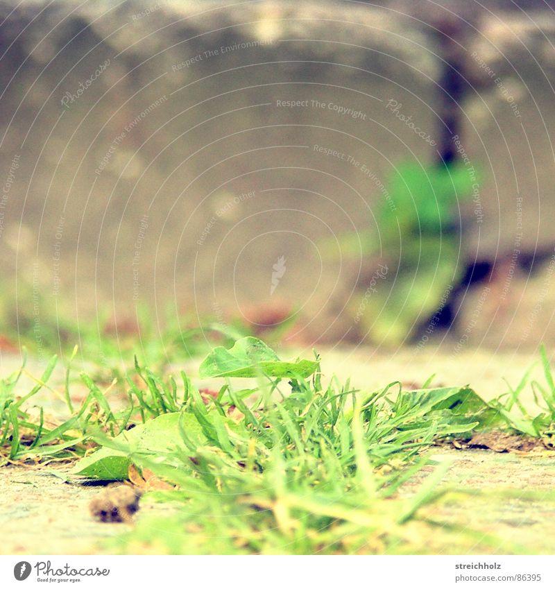Gras gegen Stein Überleben grün Blatt Grasnarbe Zweckbeziehung Weide wirklich Grasland Rasen Tod Fundament aufsteigen Symbiose Sportrasen Wiese Splitter Leben