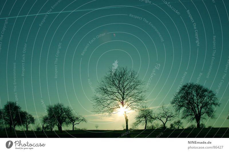 Stimmungsvoll ... grün blau-grün grün-blau schwarz Flugzeug gelb Sonnenuntergang Abend Abenddämmerung Romantik Sträucher Horizont stimmig türkis Baumstruktur