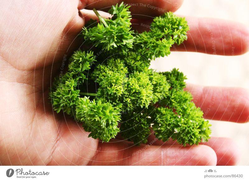 .:: dasGRÜNEetwas ::. Hand Petersilie grün Küche selbstgemacht Gemüse Garten auf der hand liegend Verschiedenheit per hand