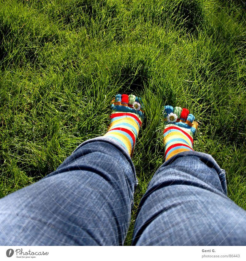 Frühlingsfüße Part ll Sommer Freude gelb Wiese Gras Fuß Beine Jeanshose Rasen stehen Strümpfe Schönes Wetter Gänseblümchen Zehen gestreift