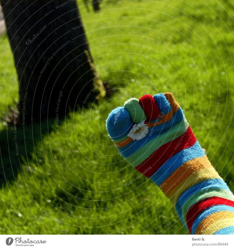 Frühlingsfüße - Part lll Sommer gelb Wiese Gras Fuß Rasen Baumstamm Strümpfe Schönes Wetter Gänseblümchen Schaukel Zehen gestreift saftig Körperteile