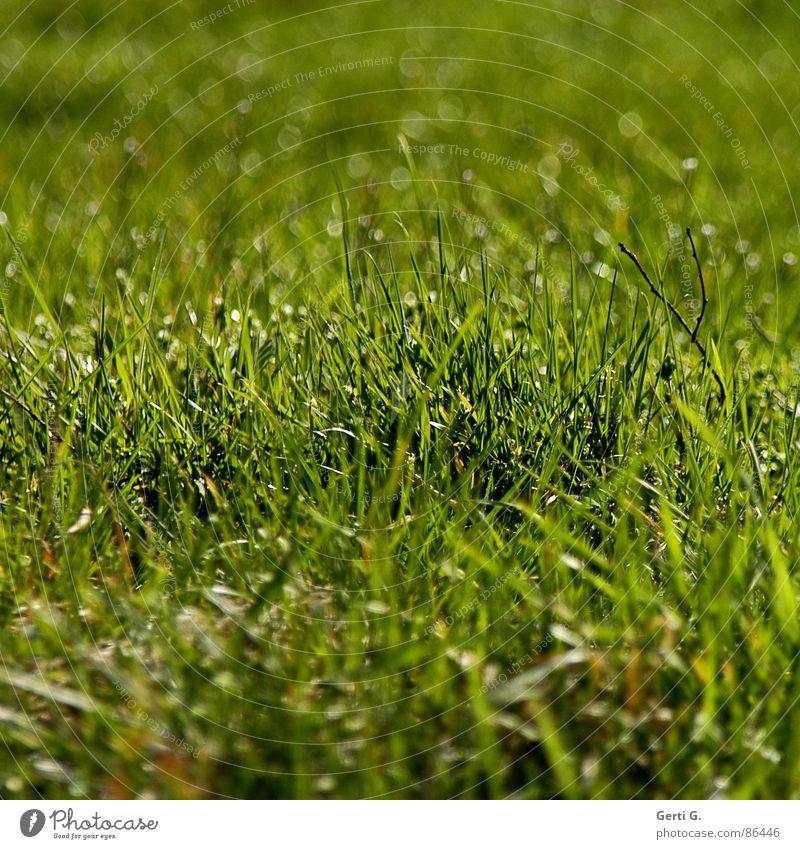 Grünzoig Feld Landwirtschaft Ackerbau Halm hell Sonnenlicht Flutlicht Sommer grün giftgrün Quadrat Gras Wiese Liegewiese frisch saftig Unschärfe Freude Frühling