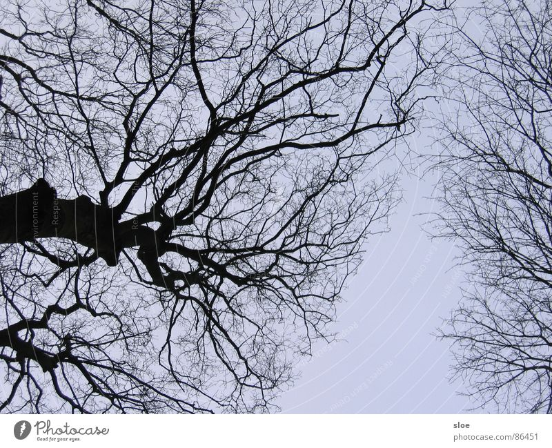 Lebenslinien Natur Umwelt Kraft Ast Baumstamm Zweig Naturphänomene Baumstruktur