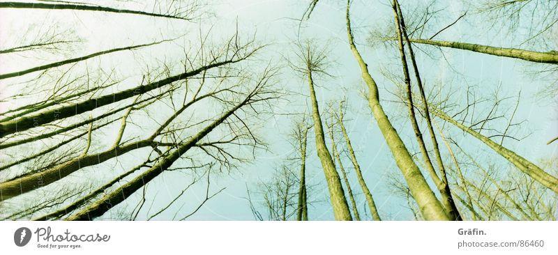 zum Himmel gereckt Natur Winter Blatt kalt Herbst Wiese Holz groß Ast Baumstamm Zweig Panorama (Bildformat) Umweltschutz Skelett Moor