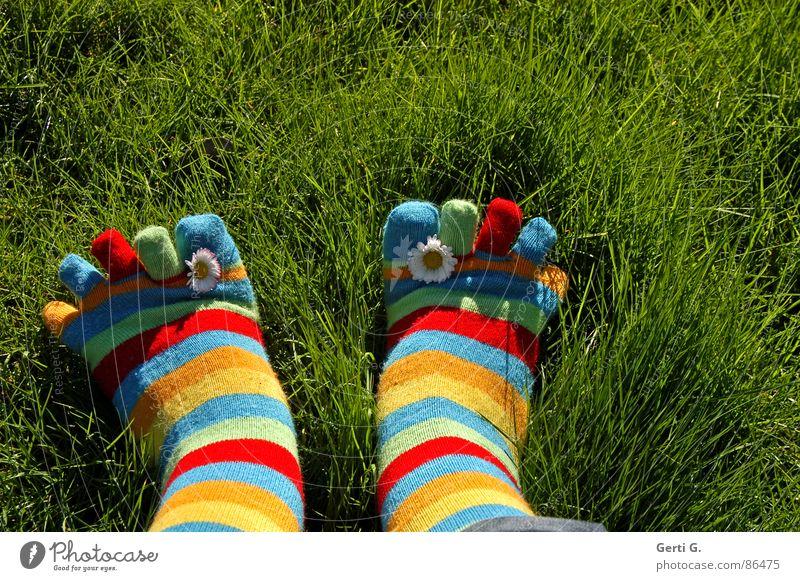 den Frühling einwinken Strümpfe Ringelsocken gestreift mehrfarbig Gänseblümchen gelb Gras Wiese Zehen Frühlingsgefühle Sonnenlicht saftig Sommer Freude