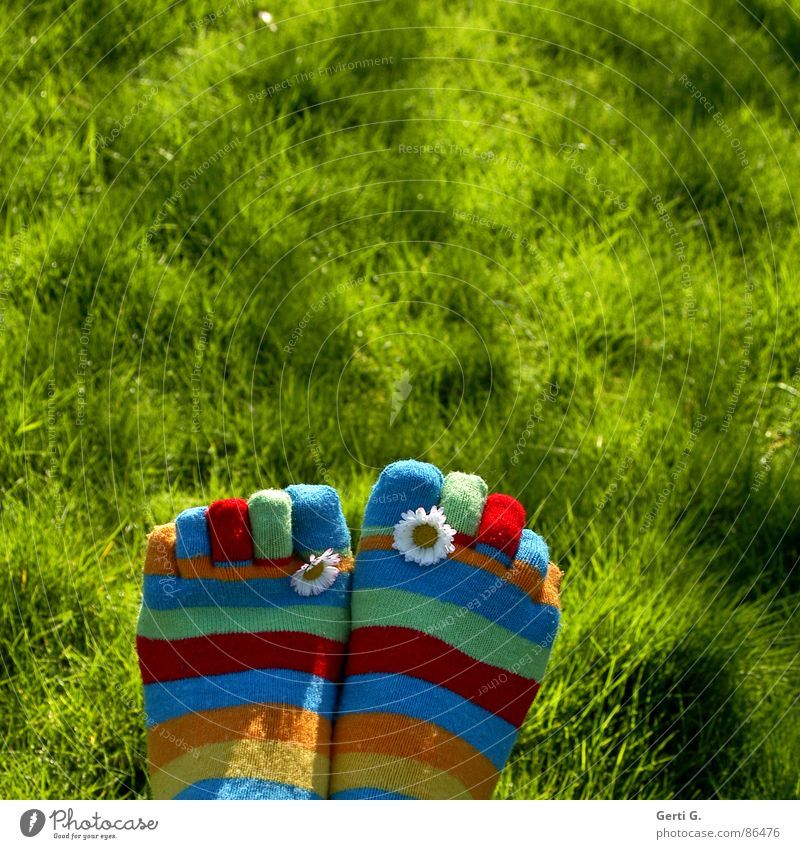 Frühlingsfüße Part ... Strümpfe Ringelsocken gestreift mehrfarbig Gänseblümchen gelb Gras Wiese Zehen Frühlingsgefühle Sonnenlicht saftig Bewegungsunschärfe