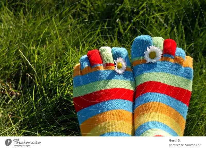 %.{& Strümpfe Ringelsocken gestreift mehrfarbig Frühling Gänseblümchen gelb Gras Wiese Zehen Frühlingsgefühle Sonnenlicht saftig Freude Sommer zehensocken