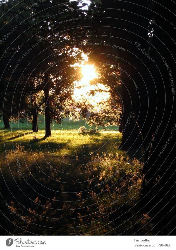 Sommer 2006 Sonnenuntergang Physik Umwelt herzlich heiß Abend Naturphänomene Wärme sonnenstahlen braun werden lassen Abenddämmerung warme jahreszeit