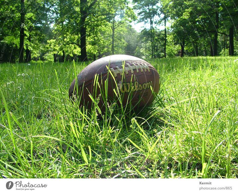 Football nach Touchdown American Football Wiese Baum Freizeit & Hobby Nahaufnahme Wilson Lederball