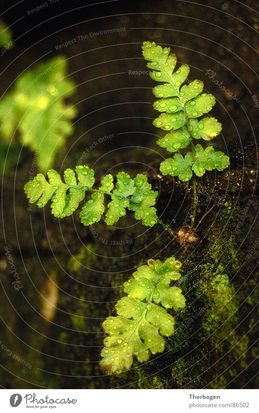 Farn Natur grün Pflanze Seil verfallen Echte Farne