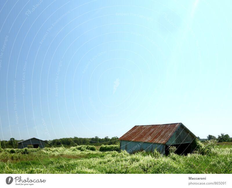 Versinken Umwelt Natur Landschaft Wolkenloser Himmel Wetter Schönes Wetter Pflanze Sträucher Dorf Menschenleer Haus Hütte Fassade alt Blühend Wachstum