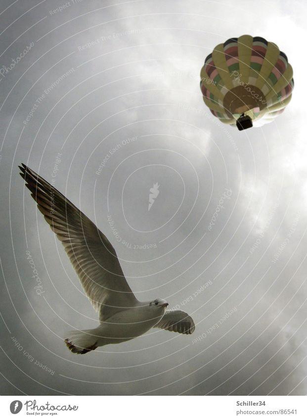 FLIEGERSTAFFEL Möwe Möwenvögel Vogel Meer See Atlantik Pazifik weiß grau braun gelb rot grün Tier Lebewesen Federvieh Ballone rund Wolken Luft Licht strahlend