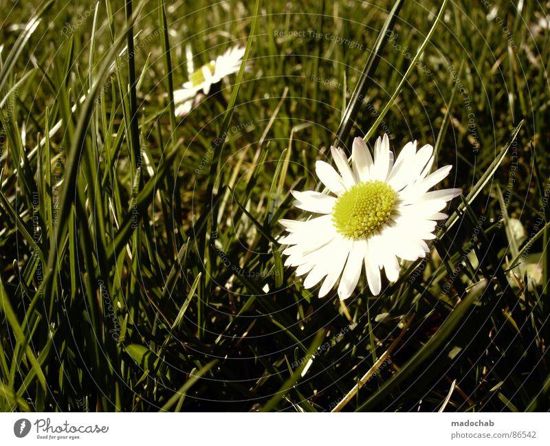 I LOVE BLÜMCHEN Natur schön grün Blume Umwelt Gefühle Frühling Wiese Beleuchtung Gras Spielen träumen glänzend Idylle ästhetisch fantastisch