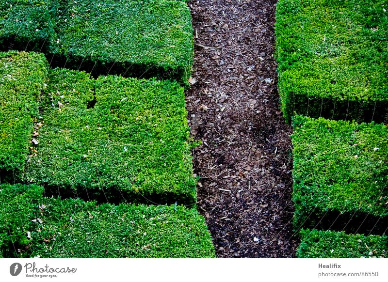 Path Pflanze Frühling Sommer Sträucher Hecke Garten Park Wege & Pfade Beet Holz Linie Netz gehen wandern eckig einfach natürlich braun grün ruhig chaotisch