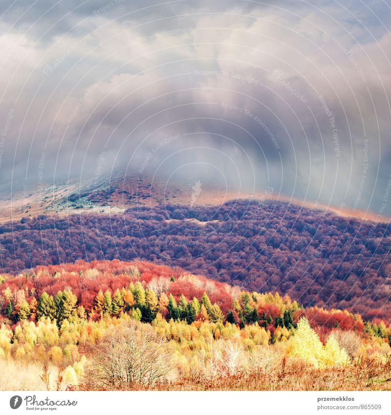 Natur Baum rot Landschaft Wolken Wald gelb Berge u. Gebirge Wiese Herbst Gras Freiheit braun Park Jahreszeiten Hügel