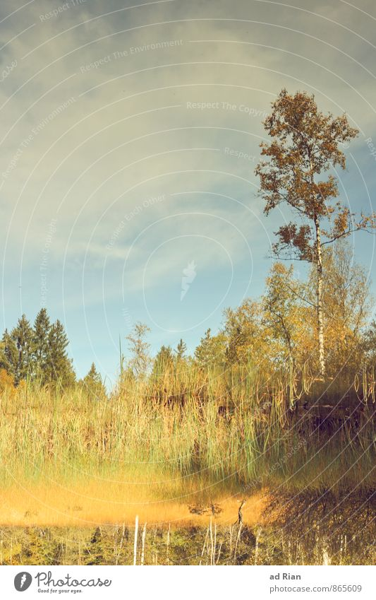 Spieglein, Spieglein auf dem Land. Himmel Natur Pflanze Baum Landschaft Blatt Wolken Tier Wald Umwelt Herbst Gras Glück See Horizont träumen