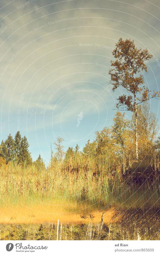 Spieglein, Spieglein auf dem Land. wandern Umwelt Natur Landschaft Pflanze Tier Himmel Wolken Horizont Herbst Schönes Wetter Baum Gras Sträucher Blatt