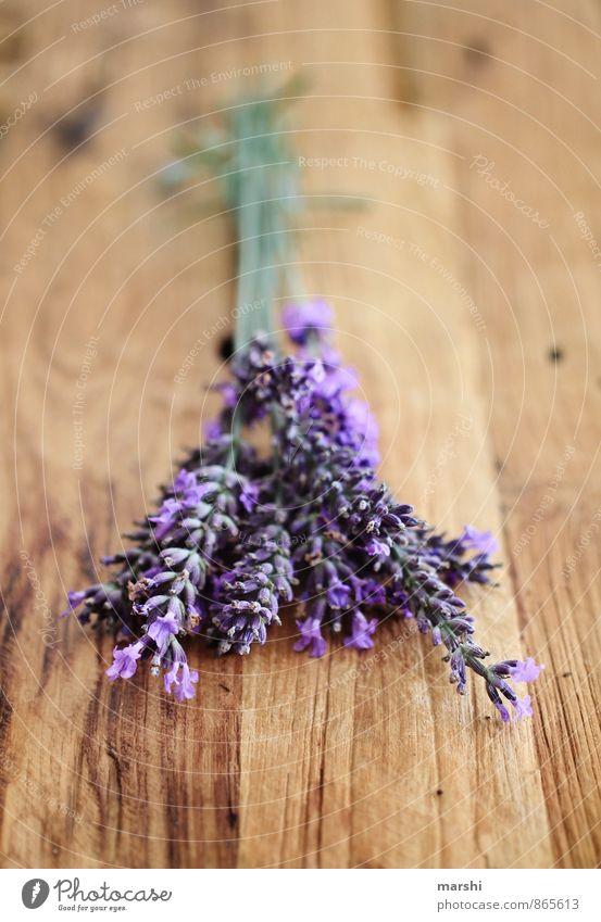 Lavendelduft Natur Pflanze Blume Garten violett Duft Geruch Holztisch rustikal altehrwürdig Blüte sommerlich Sommer Gartenarbeit Farbfoto Innenaufnahme