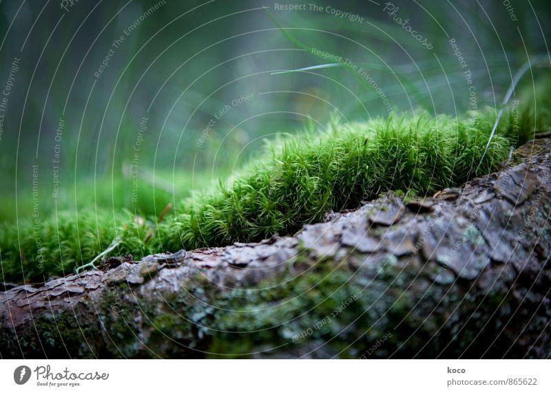 An einem verwunschenen Ort (III) Umwelt Landschaft Pflanze Frühling Sommer Herbst Baum Gras Moos Baumwurzel Wurzel Baumstamm Wald Holz berühren Wachstum einfach