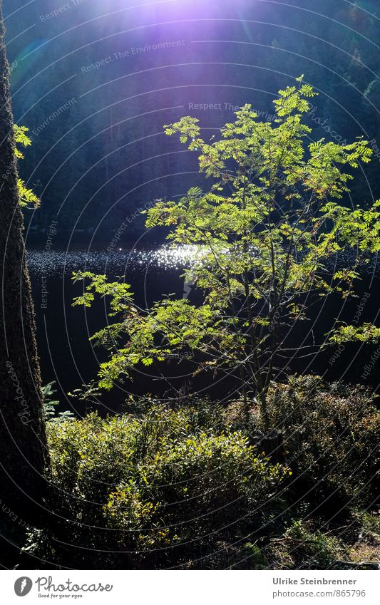 Sommer am Glaswaldsee Natur Ferien & Urlaub & Reisen Pflanze grün Wasser Baum Landschaft ruhig Wald Umwelt Berge u. Gebirge natürlich See glänzend liegen