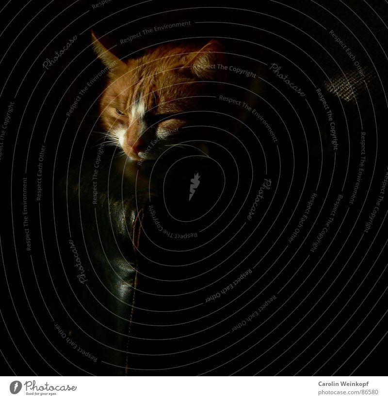 Paul ist faul. rot Erholung Nachmittag Halbschlaf Schnurren Miau Kissen schwarz blenden schlafen Blick Müdigkeit Sonnenbad Hauskatze schlaff schlaftrunken