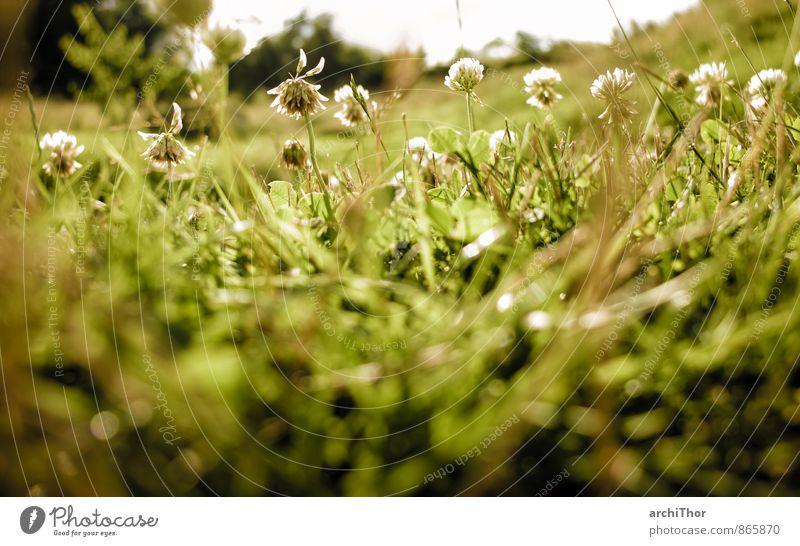 Dschungel Garten Natur Pflanze Sonne Sonnenlicht Sommer Schönes Wetter Blume Gras Blüte Grünpflanze Klee Wiese Erholung Freundlichkeit Fröhlichkeit Wärme braun