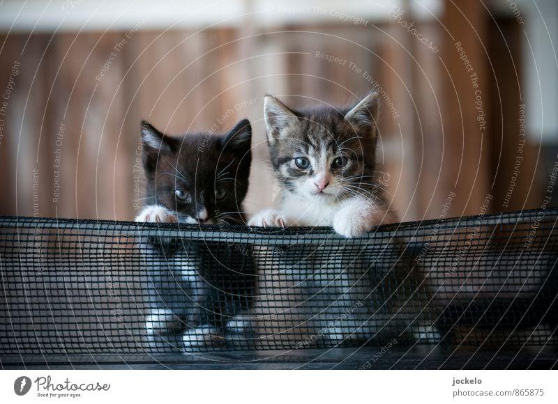 Katzentisch Tier Haustier 2 Tiergruppe Tierpaar Tierjunges füttern braun grau grün schwarz Stimmung Sympathie Schüchternheit schön Selbstständigkeit