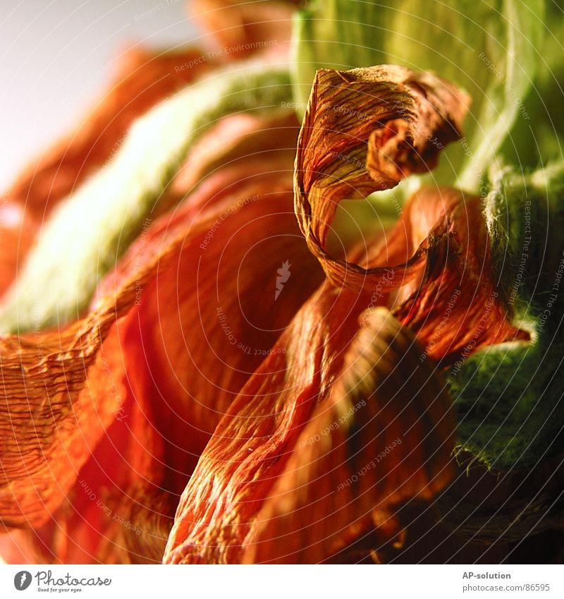 Blumengeschnörkel grün organisch Pflanze Blüte Wachstum bestäuben Herbstfärbung Blumenstrauß schön zart Botanik Blumenhändler Pflanzenteile Blütenstempel