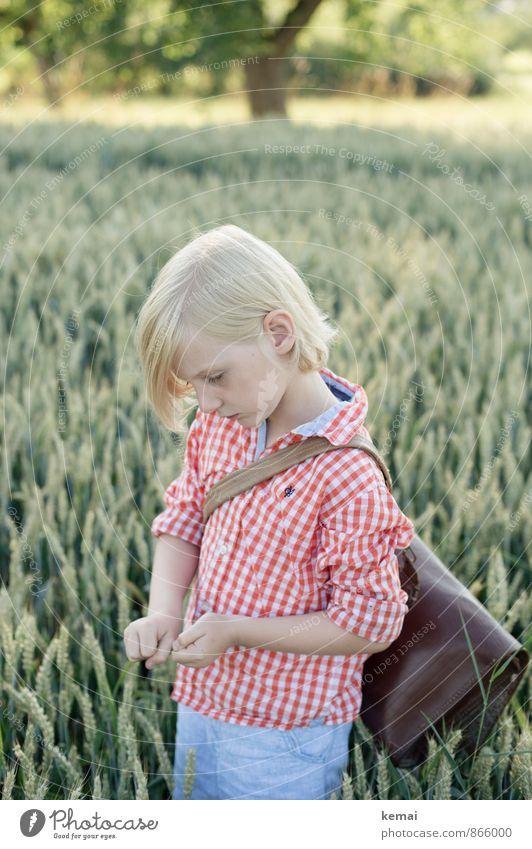 Schulbub Freizeit & Hobby Mensch Junge Kindheit Leben Kopf Gesicht Ohr Arme Hand 1 3-8 Jahre Umwelt Pflanze Nutzpflanze Getreide Weizen Weizenfeld Hemd
