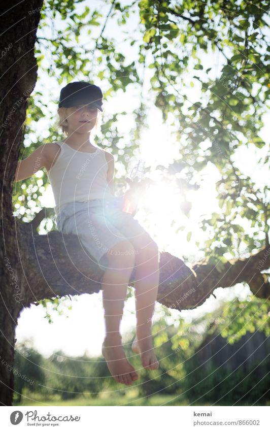 Junge mit Mütze auf einem Baum im Gegenlicht Klettern Abenteuer Mensch maskulin Kindheit Leben Körper 1 3-8 Jahre Natur Sonnenlicht Sommer Schönes Wetter Blatt
