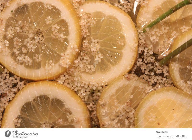 Holunderblüten mit Zitronen frisch Cocktail Erfrischungsgetränk sauer Limonade Longdrink Sirup