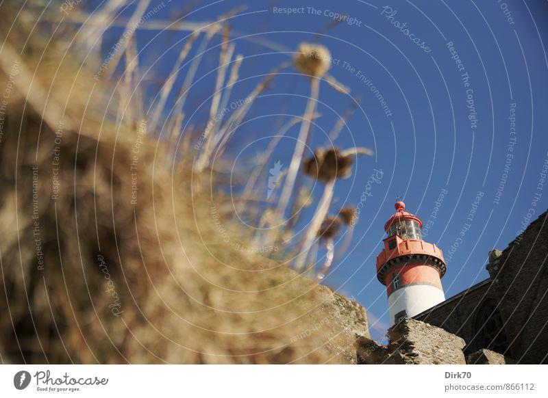 Leuchtturm Saint Mathieu, Bretagne blau alt Pflanze weiß Meer rot Blume Ferne schwarz Wärme Wand Gras Mauer braun Schönes Wetter Kirche
