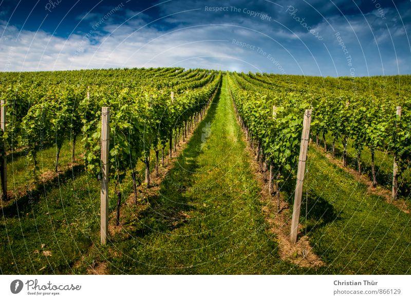 Ab in die Weinberge / Gamlitz Natur Pflanze Sommer Baum Sonne Erholung Landschaft Wolken ruhig Umwelt Leben Gras Tourismus Zufriedenheit wandern ästhetisch